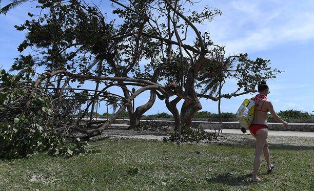 Nainen käveli ranta-asussa maanantaina Miamissa. Kuvassa tuulen katkomia puita.