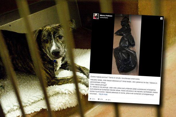 Eläinsuojeluneuvojan Facebook-päivitystä on jaettu jo yli 20 000 kertaa. Kuvassa vasemmalla oleva koira ei liity tapaukseen.