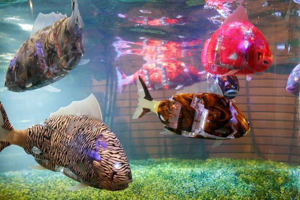 Hotellin aulan akvaarion kalat ovat luonnollisesti robotteja.