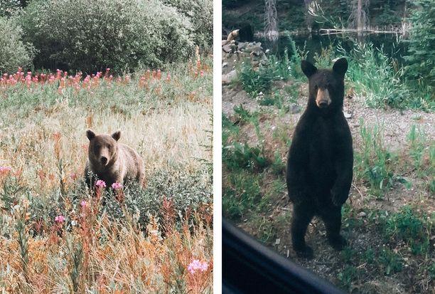 Karhuja näkyi jopa näinkin läheltä.