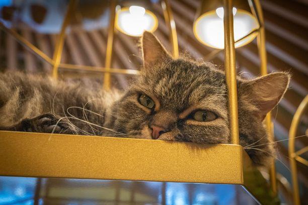 Kissan kanssa pitää viettää aikaa. Sitä ei voi tilata huoneeseen, jos sen kanssa ei aio olla.