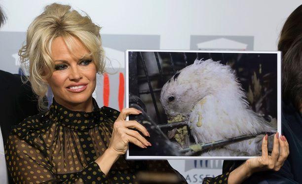 Pamela Anderson tunnetaan tiukkana eläinten oikeuksien puolustajana.