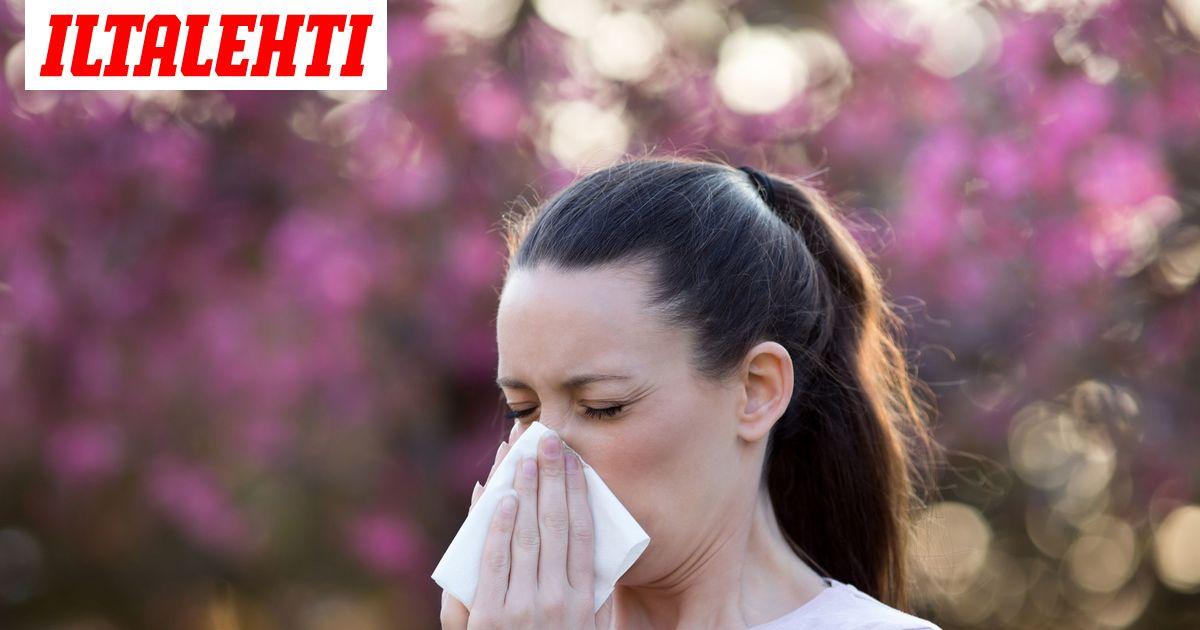 Heinä Allergia