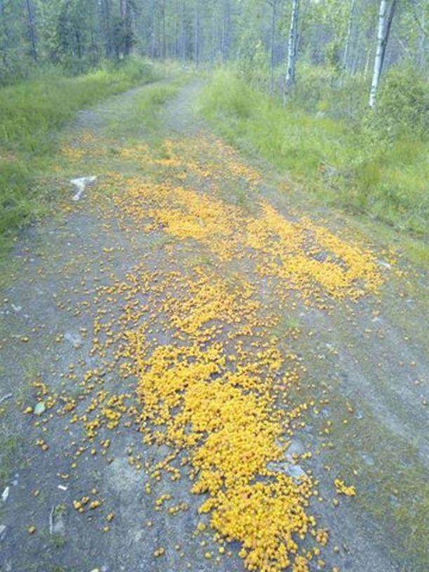 Ranualainen Kimmo Sarajärvi törmäsi hillojen päällystämään metsätiehen tiistaina. Tiettävästi marjat oli jätetty paikalle jo maanantaina, kun ranualainen Arto Haarahiltunen havaitsi ne.