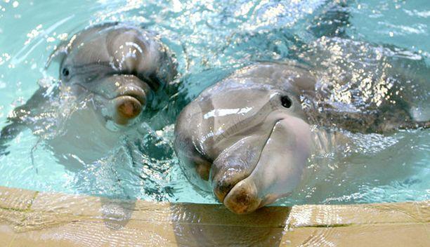 Näsi (vas.) ja Delfi viihtyivät yhdessä jo vanhaassa altaassa.
