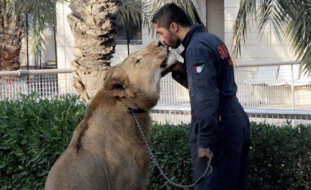 Varakkaaseen eliittiin kuuluva Mohammed Turki pitää eläimiään aavikolla sijaitsevalla tilallaan.