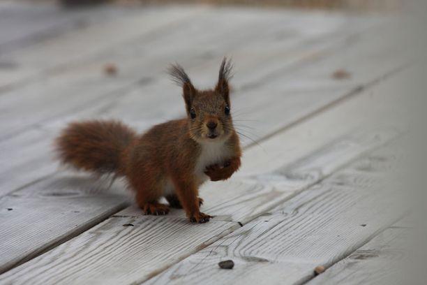 Oravan Ikä