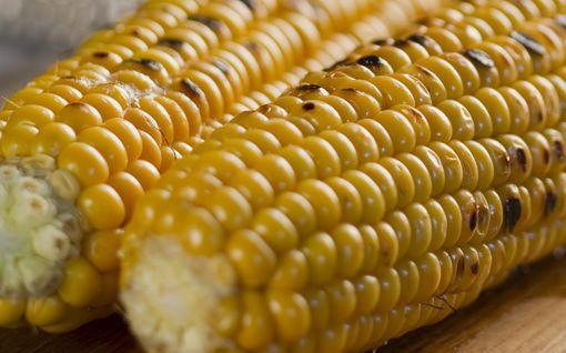 Tämä grillikikka lupasi mullistaa maissin syömisen –laitoimme niksin testiin