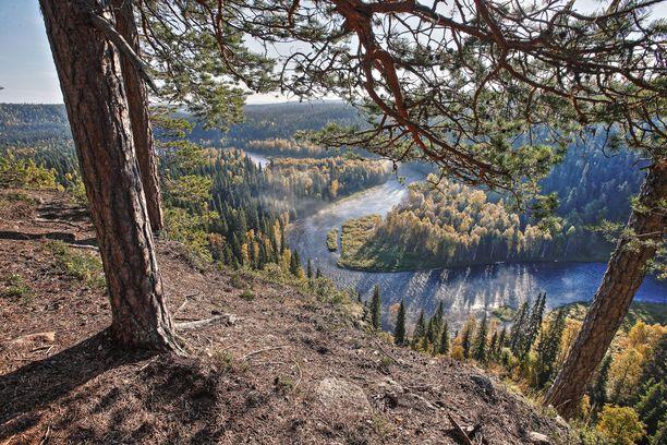 Kitkajoki kiemurtaa Oulangan kansallispuistossa.