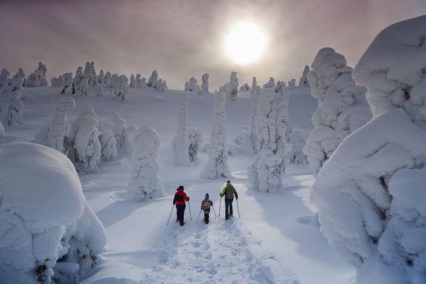 Ruka-tunturin tykkylumipuut ovat kuin kauniita veistoksia. Sveitsiläinen Böhnerin perhe lähti lumikenkäilemään tunturiin.