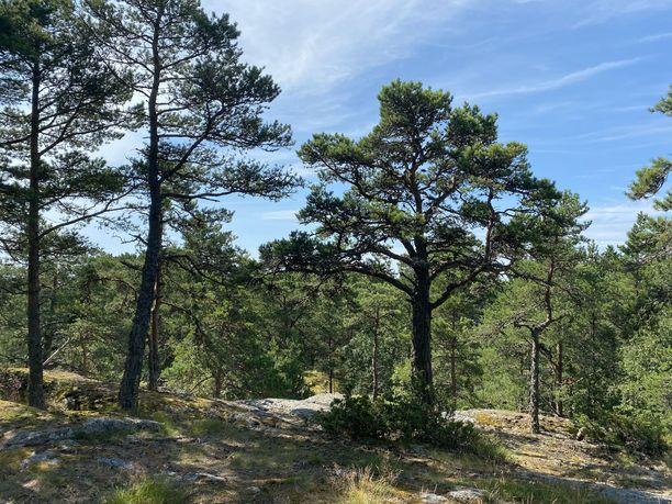 Ulko-Tammiossa on sekä lehtomaista metsää että kuivempaa, kallioista maastoa.