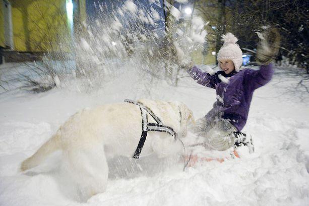 Helsinkiläinen Julia Tuovinen, 10, leikki lumessa labradorinnoutaja Mikin kanssa Helsingin Herttoniemessä keskiviikkona.