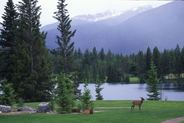 Luonnonläheinen tunnelma vallitsee Fairmont Park Lodgen tiluksilla.