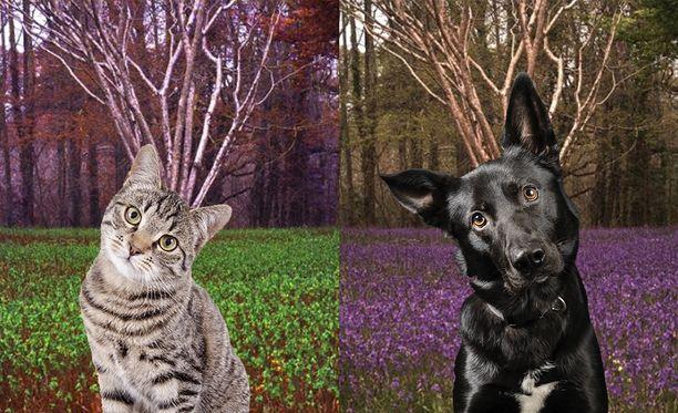 Pian voimme katsella maailmaa eläinten silmin.
