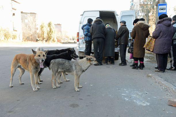 Kontaktilinjan molemmin puolin on edelleen pula elintarvikkeista, lääkkeistä ja hygieniatarvikkeista. Kuvan leipäjono Pervomaiskissa Venäjän tukemien kapinallisten alueella marraskuussa 2014.