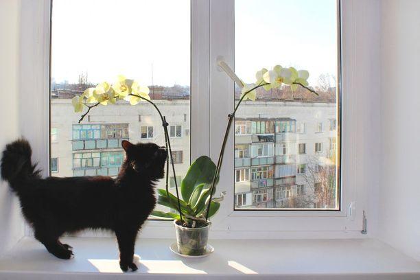 Nainen halusi päästä kissoista eroon heittämällä ne ikkunasta ulos. Kuvituskuva.