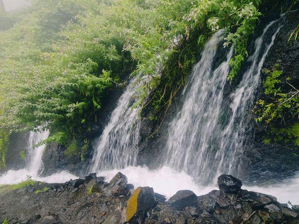 Luonnonystävä löytää paljon ihailtavaa La Palman vaellusreittien varrelta.