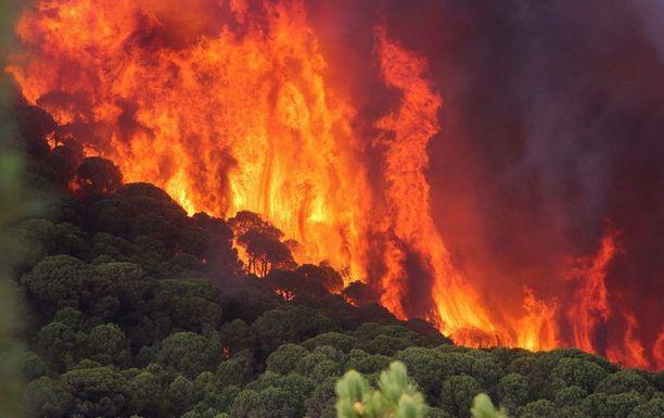 Pitkään jatkunut kuumuus ja kuivuus ovat aiheuttaneet vakavia maastopaloja ympäri Euroopan.