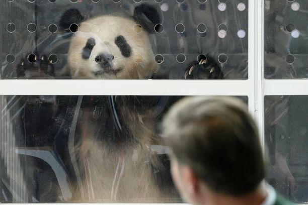 Pandadiplomatialla Kiina pyrkii muun muassa levittämään positiivista Kiina-kuvaa maailmalla.