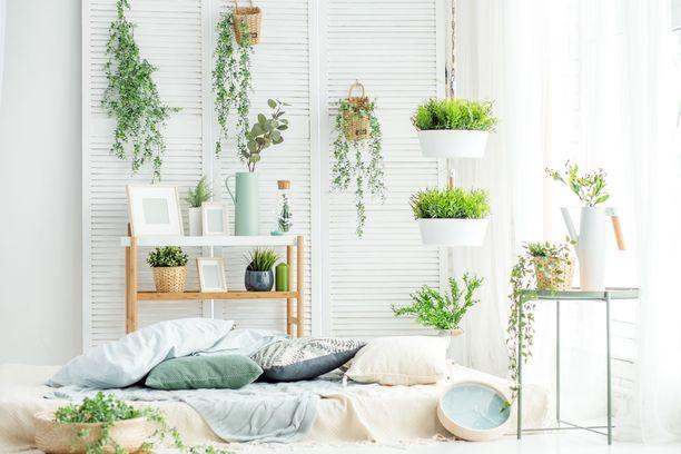 Trenditietoiset antavat kasveille tilaa kodissaan.