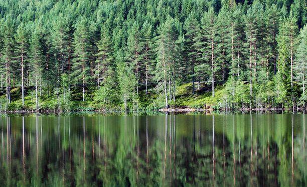 Eniten koskematonta metsää hävisi raportin mukaan Venäjällä. Kuvituskuva.