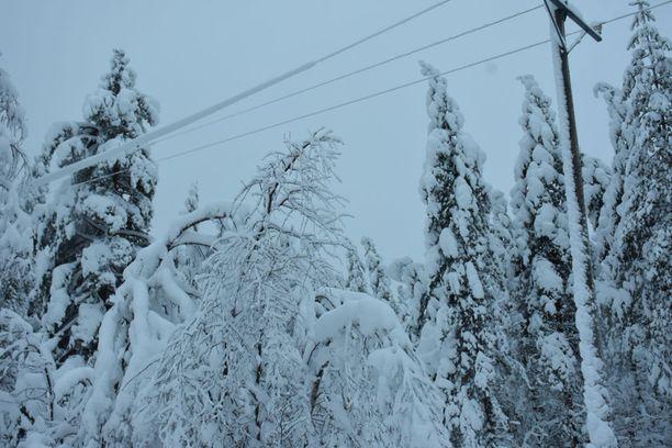Lumesta on aiheutunut harvemmin haittaa sähkönjakeluun rannikkoalueilla. Toisin oli viime talvena Kainuussa, josta kuva on otettu.
