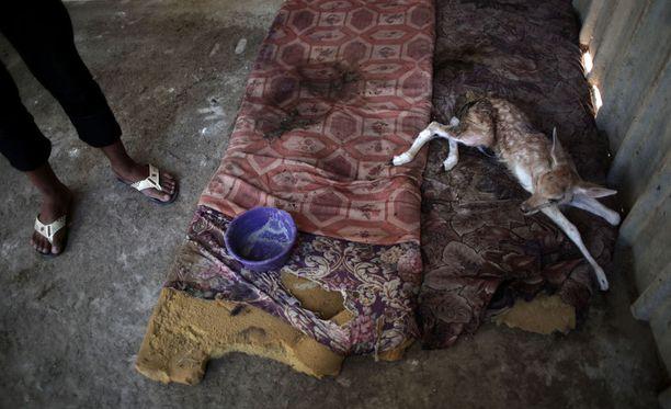 Eläimillä on huonot oltavat Khan Younisin eläintarhassa.