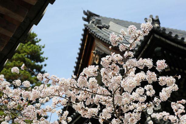 Kioton rauha on mennyttä turistitulvan vuoksi, valittaa paikallinen Reddit-foorumilla.