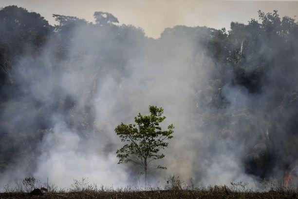 Hydron alumiinituotanto on Amazonin alueella Brasiliassa. Kuvituskuva sademetsän palosta. Kuva: AOP
