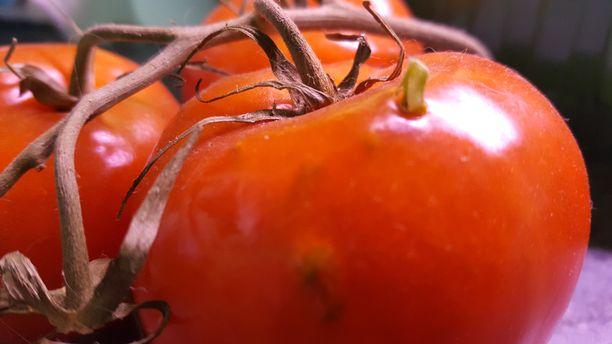 Ulkomaisissa tomaateissa Eija suosii terttutomaatteja idätykseen.