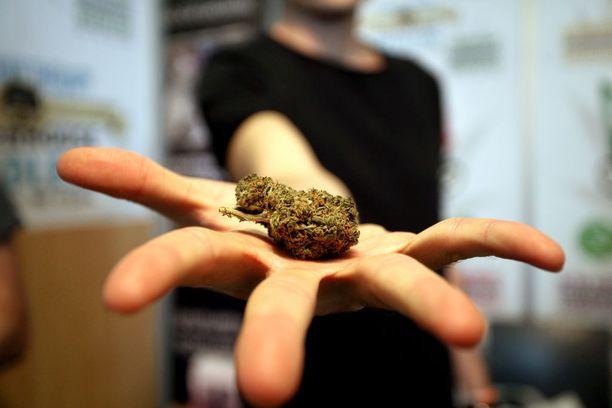 Kannabis on Kanadassa pian täysin laillinen.