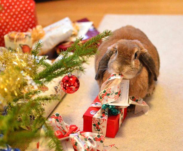 Pupu avaamassa joululahjoja.