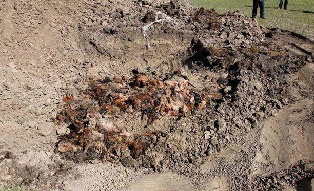 Eläinlääkärit ja poliisi tekivät vuosina 2011–2015 lammastilalle erilaisia tarkastuksia, joiden yhteydessä tilalta löytyi esimerkiksi kuolleita lampaita. Eläinten raatoja oli kaivettu maahan vuosien ajan huomattava määrä.
