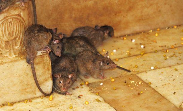 Lähes 40 rottaa oli oikeuden mukaan kokenut loimaalaisnaisen omistuksessa tarpeetonta kipua ja kärsimystä. Kuvituskuva.
