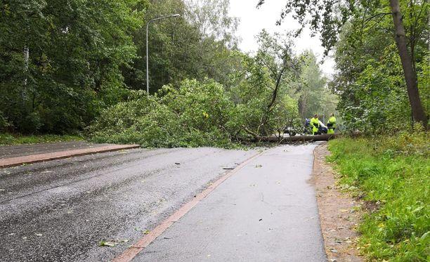 Helsingin Pihlajamäessä kaatunut puu katkaisi tien keskiviikkona.