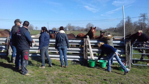 Eläinsuojelujärjesgtö Reserve huolehtii nyt hevosista, joista suurin osa on nuoria.