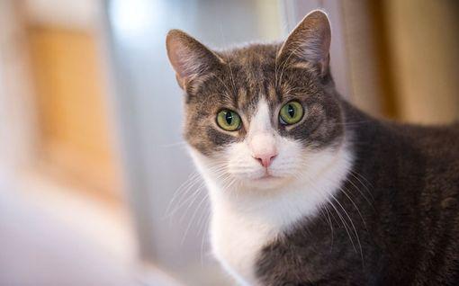 Yritätkö puhua kissallesi? Turha vaiva - kattia ei kiinnosta