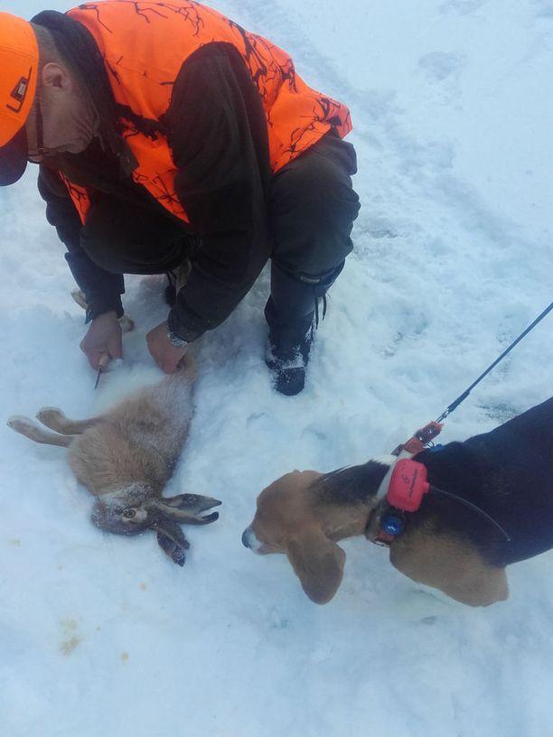 Rusakko herätti suurta kummastusta kokeneessa metsästysporukassa.