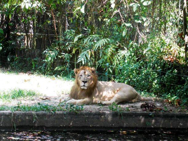 Eläintarhassa on yli 5 000 eläintä.