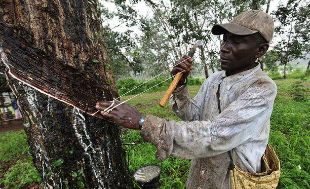 Liberiassa kumiplantaaseilla työskentelevät väittävät, että heidän olosuhteensa vastaavat orjuutta. Kuva on vuodelta 2015.