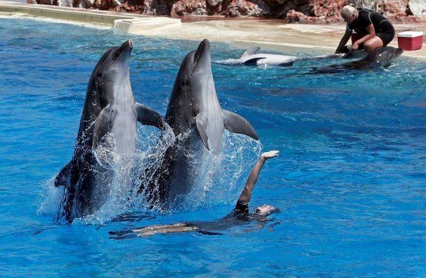 Attican eläinpuistossa Kreikassa delfiinit elävät ulkoaltaissa.