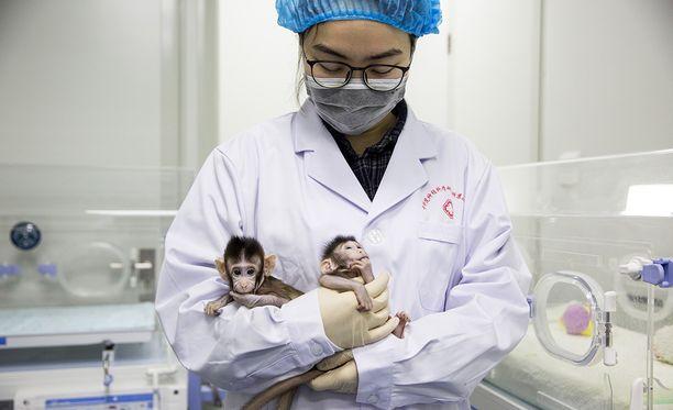 Sekä Zhong Zhong että Hua Hua kasvavat normaalisti, samalla lailla kuin muutkin heidän ikäisensä makaki-apinat. Klooniapinoita syötetään tuttipullolla.