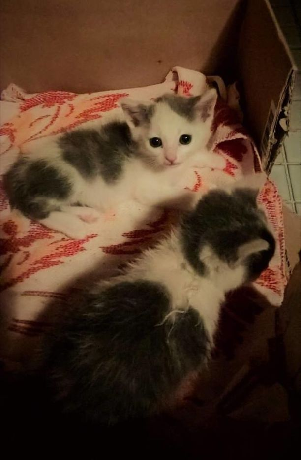 Elossa löytyneitä kissanpentuja on nyt kaksi.