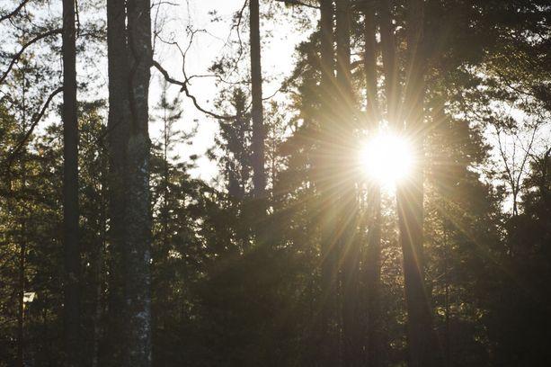 Suomen pinta-alasta lähes 72 prosenttia on metsää.