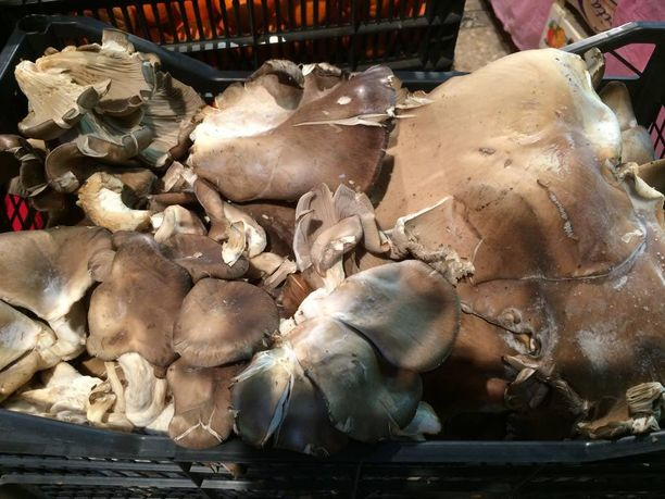 Suljetun alueen ja erityisalueiden ulkopuolella olevilla markkinoilla myydään sieniä.