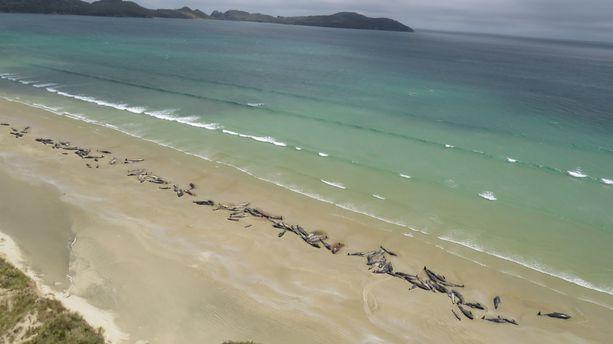 Kuolleiden valaiden rivistö reunusti hiekkarantaa Mason Bayssa.