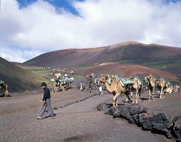 Kamelisafari vuoristossa 70-luvulla.