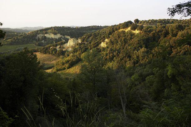 Lomaparatiisin ympäristö on vehreää.