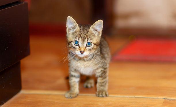 Kissanpentu kuoli pian luovutuksen jälkeen. Siitä alkoi vuosia kestänyt katkera ja kallis riita (kuvituskuva).