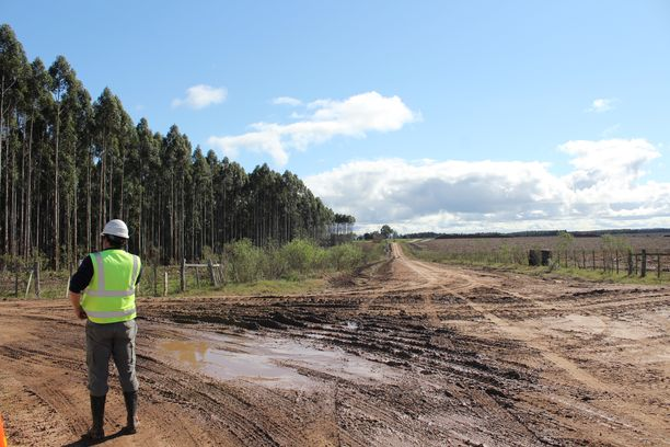 UPM:n eukalyptuspuuta kasvaa yhteensä noin miljoonan hehtaarin kokoisella plantaasialueella ympäri Uruguayta.